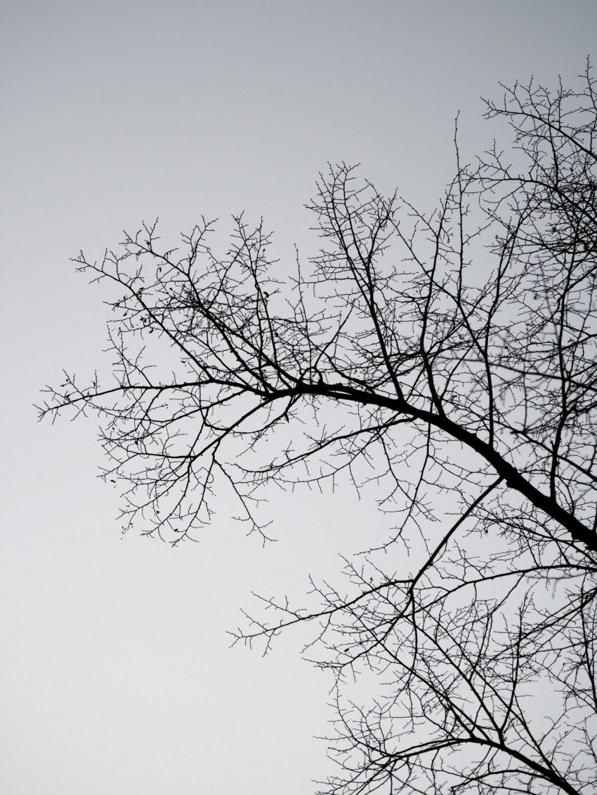talvi17